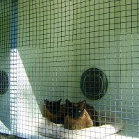 06-homestead-cattery-ashhurst-palmerston-north-25.jpg
